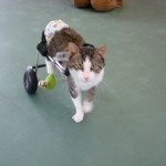 Eddie's Wheels biggest group of clients are dogs, but cats comprise a significant percentage too