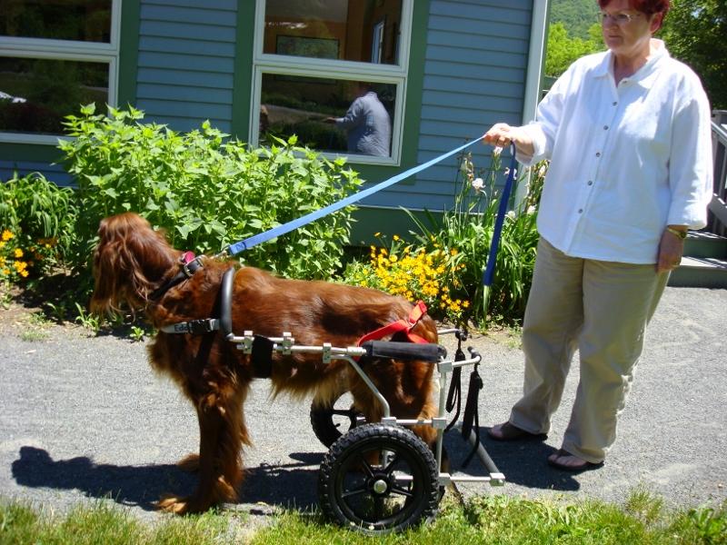 Rolli Für Hunde